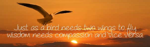 Compassion Bird
